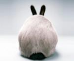 Trasero de conejo