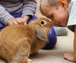 Rabbit with children