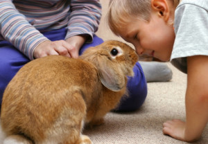 Pet rabbit with children