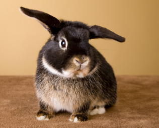 Getting A Pet Rabbit What To Expect