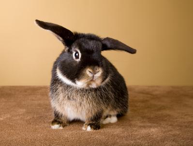 My House Rabbit