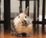 Rabbit inside house