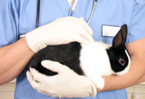 Veterinarian with rabbit