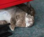Rabbits flopped together