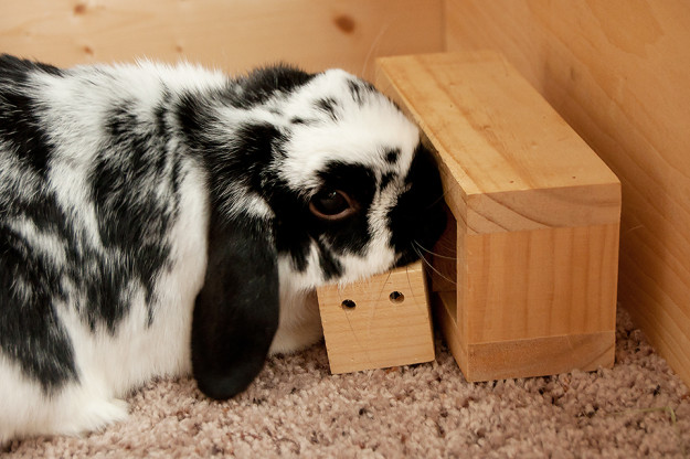 Rabbit doing logic toy