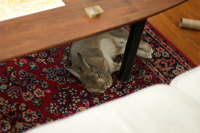 Bunny Proofing Your House Indoor Rabbits