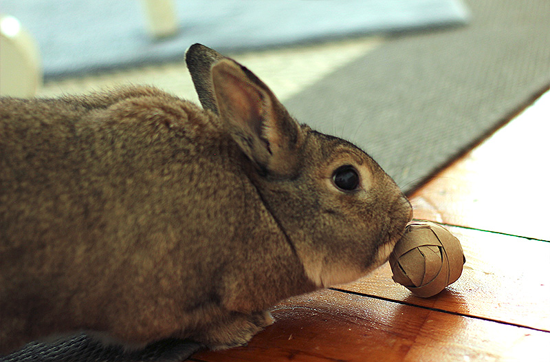 Toys For Bunnies : Logic toys for rabbits my house rabbit