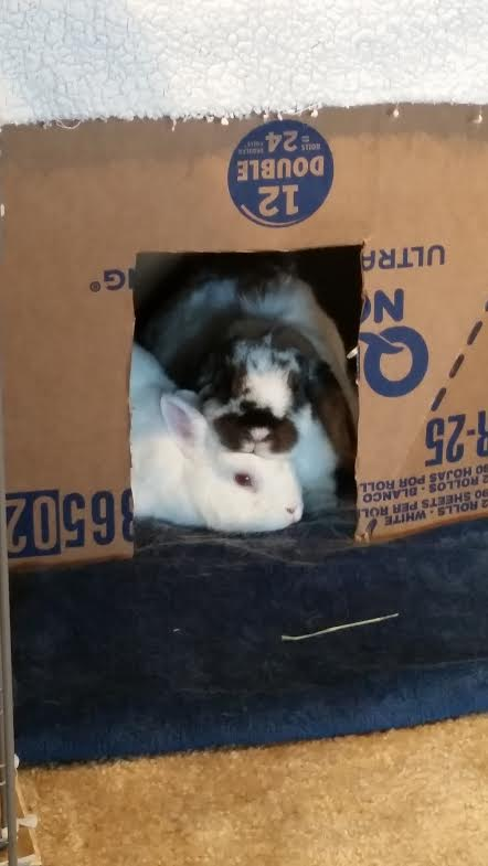 Two rabbits in box
