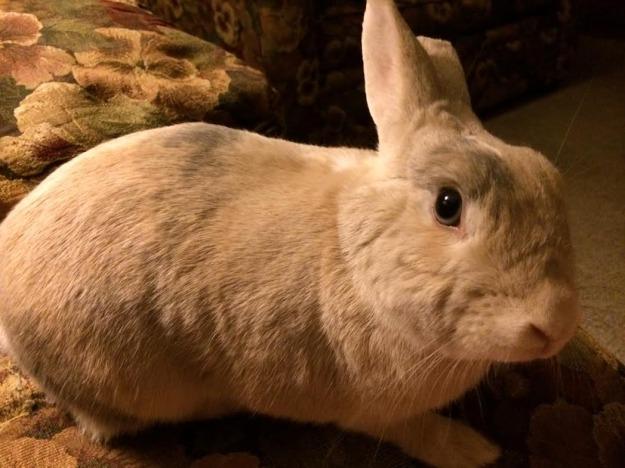 Blue eyed rabbit.