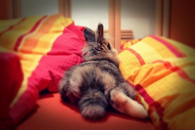 Rabbit butt