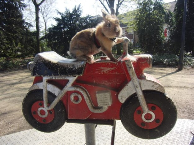 Rabbit on motorbike
