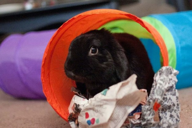 Rabbit in tunnel