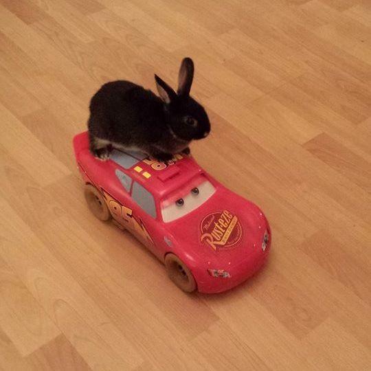 Rabbit on car