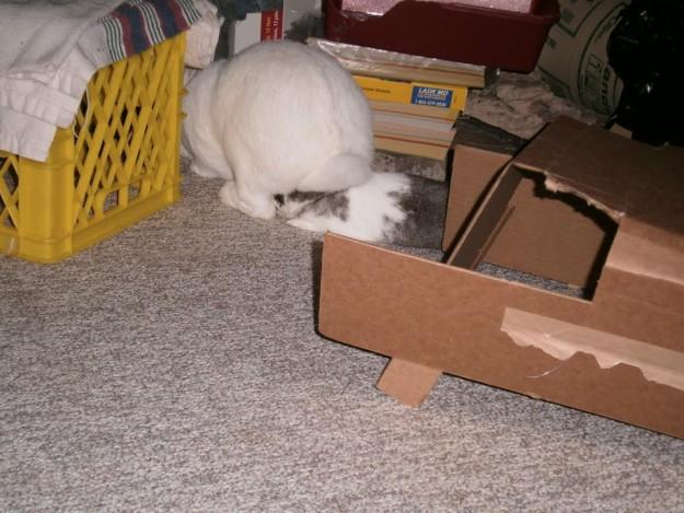 Rabbit sitting on another rabbit