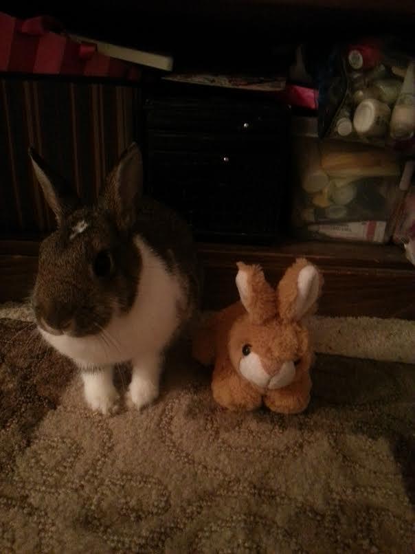 Rabbit and stuffed animal.
