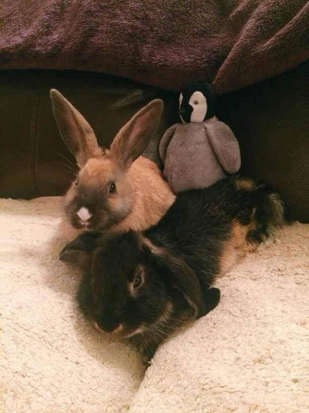 Two rabbits and stuffed penguin
