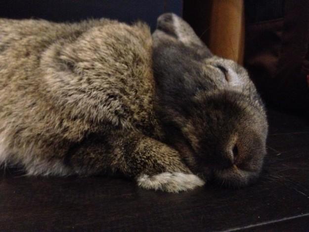 Snoozing bunny