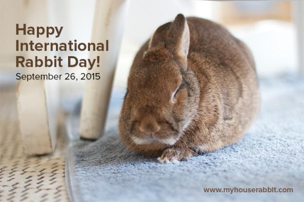 Happy International Rabbit Day