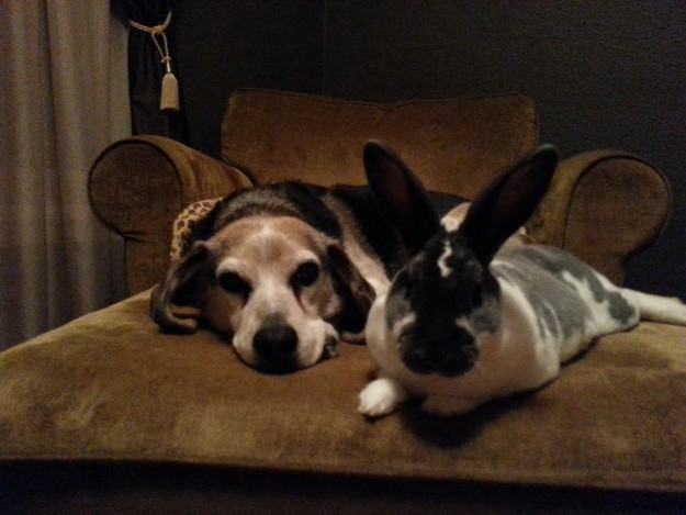 Dog and rabbit on couch