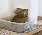 Rabbit in litterbox