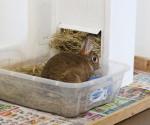 Rabbit in litterbox