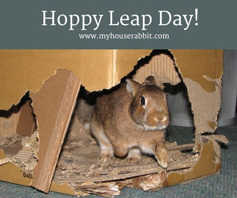 Hoppy Leap Day!