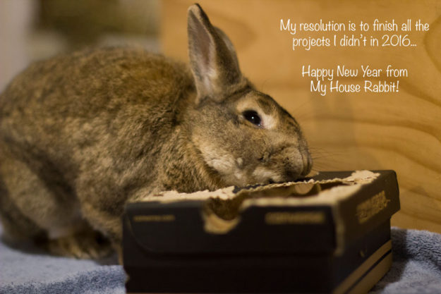 Rabbit eating box