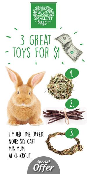 Rabbit Care   Rabbit Diet   Indoor Housing   Bunny Proofing